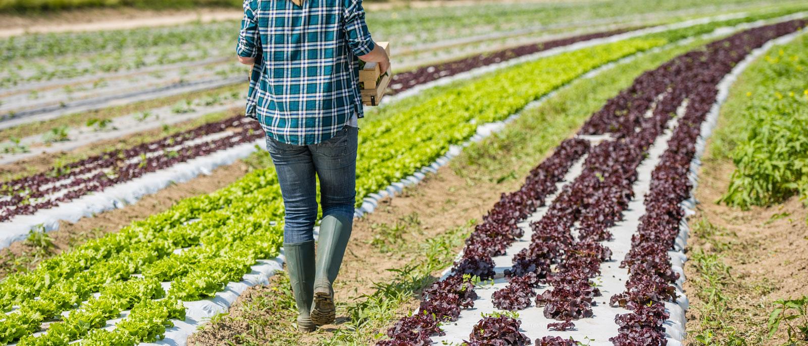 Finanziamenti per l'agricoltura 2018